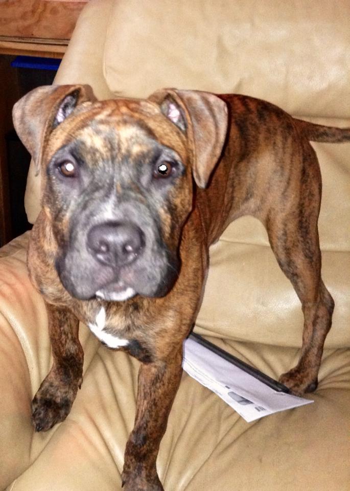Community split over shooting of area dog