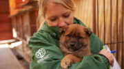 Dogs arrive from meat farm in South Korea