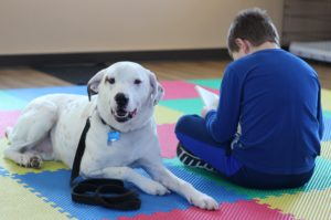 Therapy dog meet and greet to be held March 27