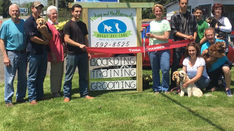 Dog Grooming Schools In Ny State