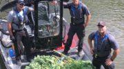 Marijuana discovered on river island