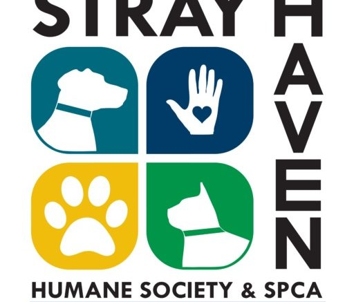 Stray Haven to hold open house and adoption promotion