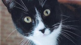 Paws and Claws Society to host annual Cat Spay Day on February 26