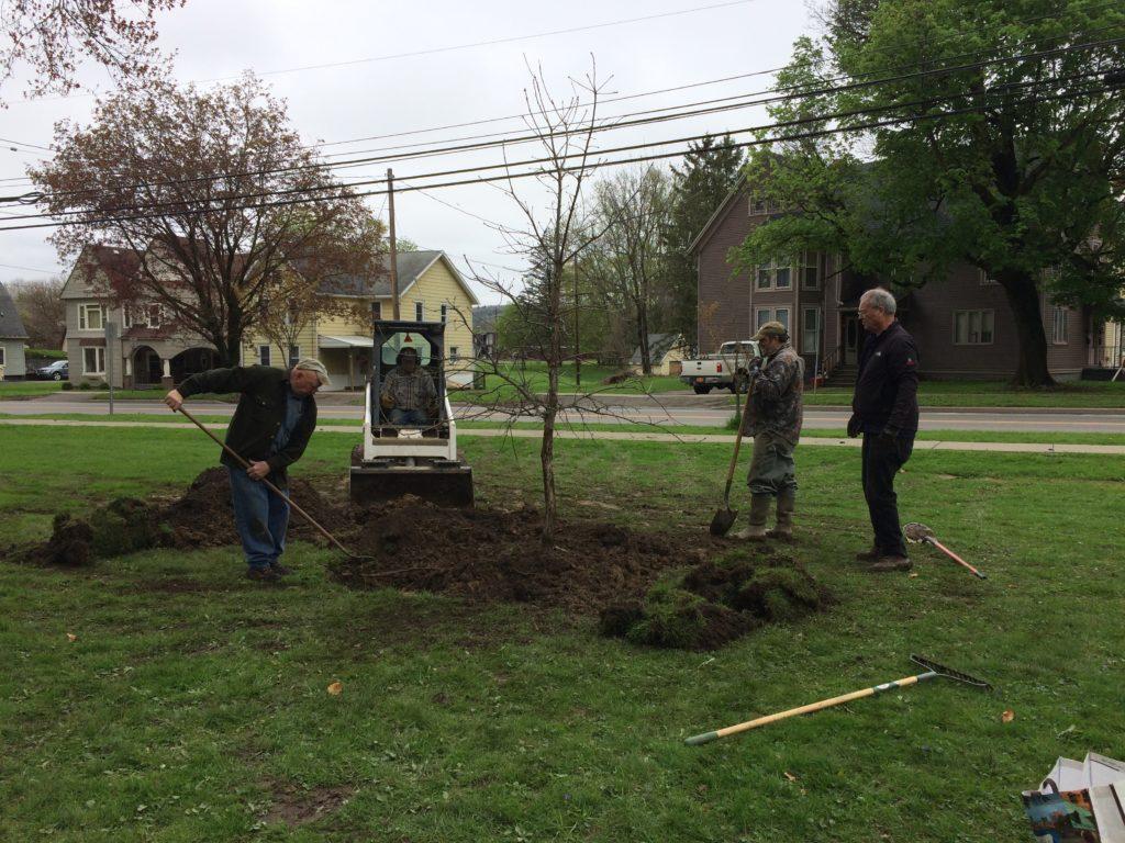 Rotary installs trees