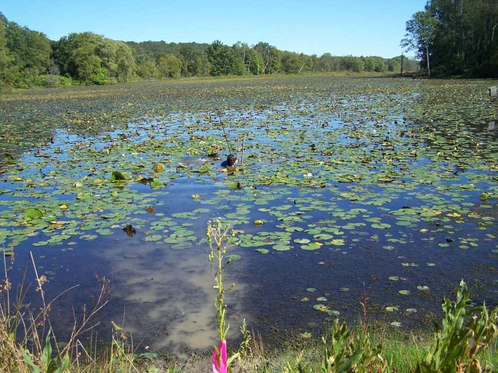 Brick Pond: Turtle Town Treasure Ready For Fall