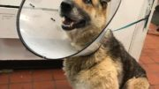 Exeter man arrested after dog located with missing limb