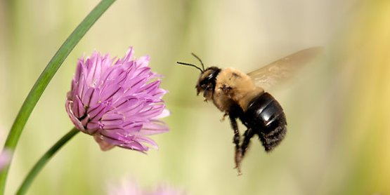 What's all the buzz about beekeeping?