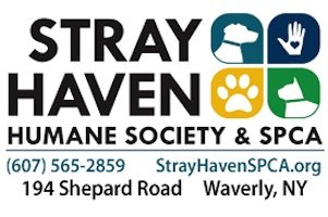 Stray Haven to participate in Best Friend Animal Society's 'Strut Your Mutt Day'