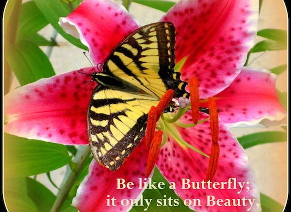 Be like a Butterfly. It Sits Only on Beauty.
