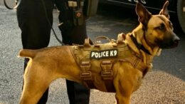 K-9 Maggie needs a new ride!