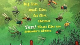 An insight into the insect world explained