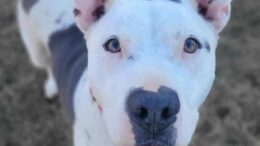 Stray Haven Pet of the Week