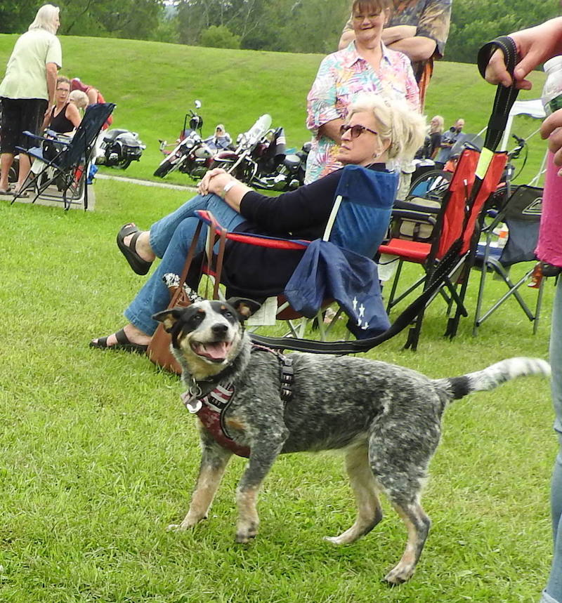 'Dog Daze of Summer' receives great support; event held under cloudy skies last Saturday